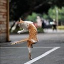 A sweet cats dance in the road | 2 dogs are very happy | Scoop.it
