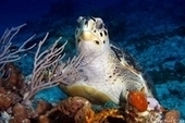 Cozumel's Most Fascinating Underwater Creatures | All about water, the oceans, environmental issues | Scoop.it
