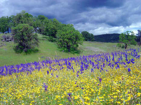 Northern California Is Already Losing Wildflowers Because of Climate Change | Sustainability Science | Scoop.it