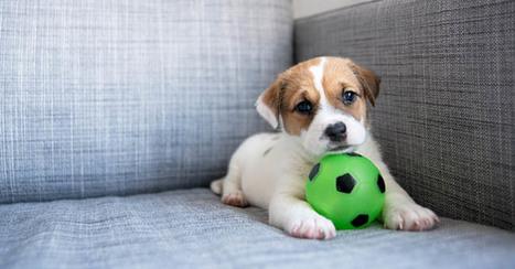 Cani: esercizi da fare in casa durante l'inverno | Dog Style | Scoop.it