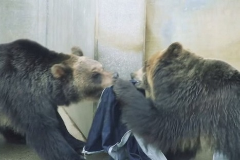 Jeans shredded by zoo animals will sell for over $1200 (Science Alert) | IELTS, ESP and CALL | Scoop.it