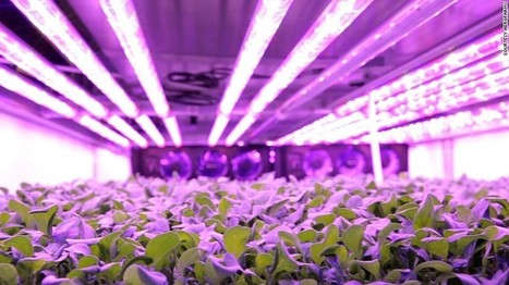 The Farm That Runs Without Sun, Soil or Water   Home and Garden Ideas   Scoop.it
