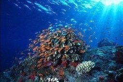 The underwater beauty of Bunaken | Cozy Resort | Scoop.it