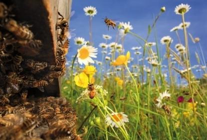 Les routes du miel  / France Inter | Miel Melipona | Scoop.it