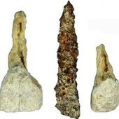 Iron Pin May Be Western Europe's Earliest False Tooth : DNews | archaeology & history | Scoop.it
