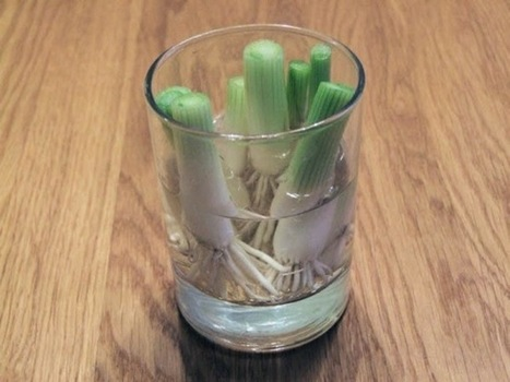 6 Vegetables You Only Need To Buy Once, Then Regrow Forever | Gardening is more than Digging the Dirt | Scoop.it