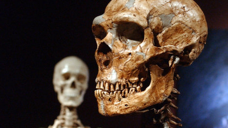 Neanderthals Leave Their Mark on Us | Aux origines | Scoop.it