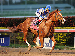 Lea Takes Donn Handicap in Track Record Time | horse racing | Scoop.it