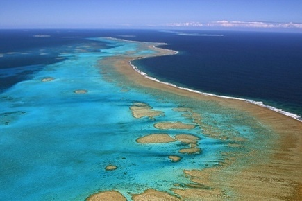 Episode massif de blanchissement des coraux observé en Nouvelle-Calédonie | The Blog's Revue by OlivierSC | Scoop.it