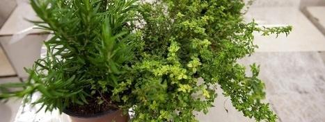 Aceites esenciales para combatir la astenia primaveral   Aromas - fragancias de la naturaleza   Scoop.it
