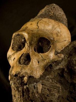 Australopithecus sediba paved the way for Homo species, new studies suggest | Histoire - Antiquité | Scoop.it