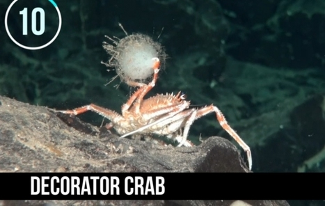Los 10 animales más extraños del nuevo Parque marino de Chile   Tele 13   Agua   Scoop.it
