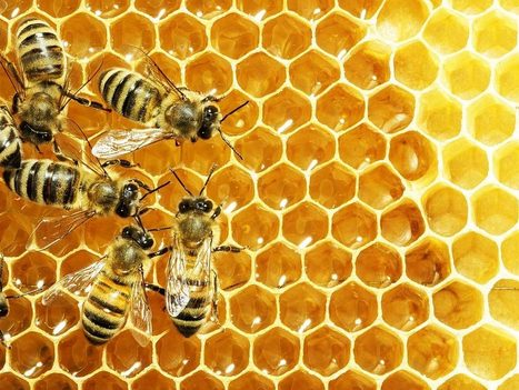 New Report Reveals a Bee-Killing Pesticide is Mostly Unnecessary | Environmental Justice | Scoop.it