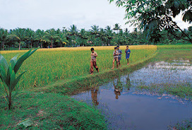 Kerala Tour Packages || Kerala Tourism: Top Places of Kerala to Explore on Kerala Tours | Kerala Tour Package | Scoop.it