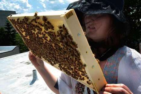 Can Urban Beekeeping Stop the Beepocalypse? | TIME.com | Pollinator conservation and diversity | Scoop.it