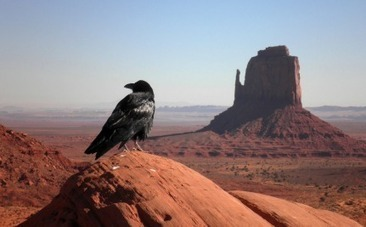 Respect the Crow: He's as Smart as Your 7-Year-Old   This Gives Me Hope   Scoop.it