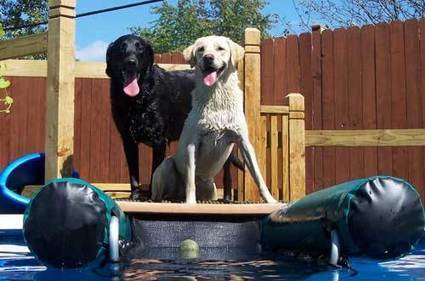 Top 10 Best Dog Ramps Or Dog Steps Reviews | Best Product Reviews | Scoop.it