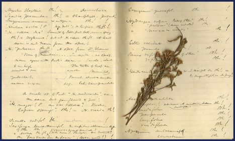 Harvard University Herbaria - Botany Libraries Archives Asa Gray Bicentennial 1810 | Herbaria | Scoop.it