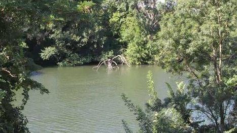 Entretenir les zones humides pour freiner les crues du Rhône   Planete DDurable   Scoop.it