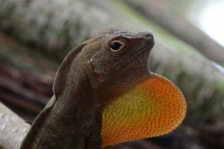 New framework sheds light on how, not if, climate change affects cold-blooded animals | GarryRogers Biosphere News | Scoop.it