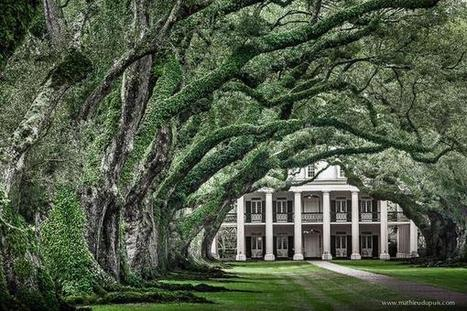 Best of the South on Twitter | Oak Alley Plantation: Things to see! | Scoop.it