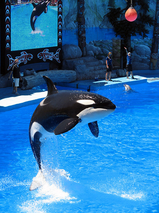 Are Your Favorite Marine Parks Connected to the Dolphin Slaughter? | DEATH AT SEA WORLD | Scoop.it