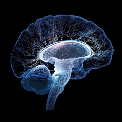 4 Cursos online de neurociencias para psicólogos y maestros - Psyciencia | Bibliotecas, bibliotecarios y otros bichos | Scoop.it