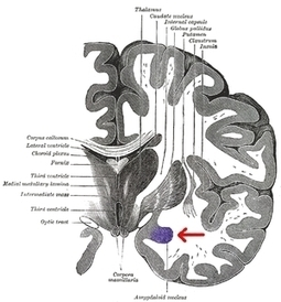 This Is Your Brain on Body Language - Forbes | Neuroanthropology | Scoop.it