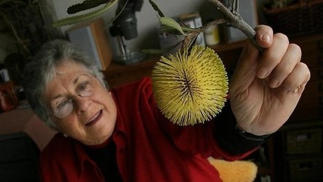 Celia Rosser - aka the Banksia lady - and her life botanic | Australian Plants on the Web | Scoop.it
