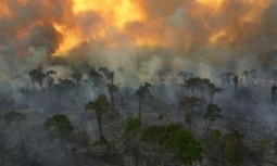 Warming Atlantic Primes The Amazon For Fire | The Glory of the Garden | Scoop.it