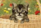 Chaton trop mignon,c'est un chat qui s'amuse,chat c'est un vrai petit ... | Drôles de chats !!!!! | Scoop.it