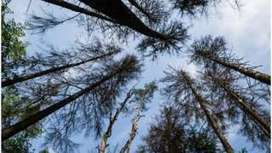 Europe's primeval forest may be at risk - BBC News | IB LANCASTER GEOGRAPHY CORE | Scoop.it