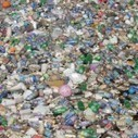 Mushroom That Eats Plastic Discovered in the Amazon - Environmental Media Association | Ayahuasca  アヤワスカ | Scoop.it