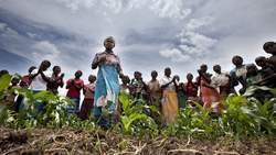 Les terres achetées au sud depuis 10 ans nourriraient un milliard de pauvres | Mais n'importe quoi ! | Scoop.it