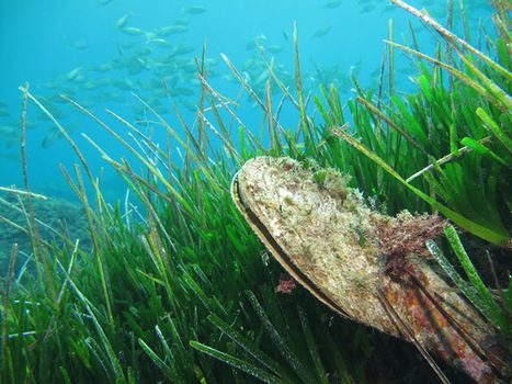 The Aquaculturists: 29/06/2015: European Commission requests Greece to adopt effective fisheries management plan in the Mediterranean | Global Aquaculture News & Events | Scoop.it