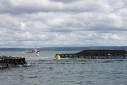 Outlook 2013: Aquaculture - Daily Business Buzz - Nova Scotia   Nova Scotia Fishing   Scoop.it