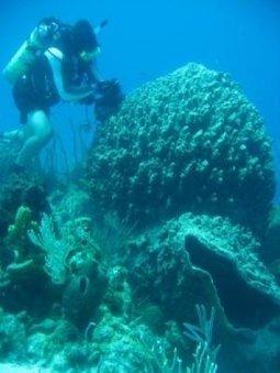 Bacteria in marine sponges harvest phosphorus for reef community | Seahorse Project | Scoop.it