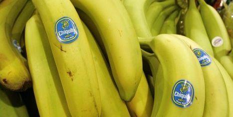 Guerre de la banane : l'UE revient sur les tarifs des importations latino-américaines | Questions de développement ... | Scoop.it