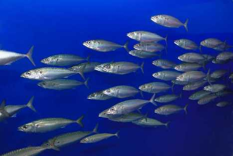 UNITED KINGDOM: Concerns over mercury levels in fish may be unfounded | AP comparative | Scoop.it
