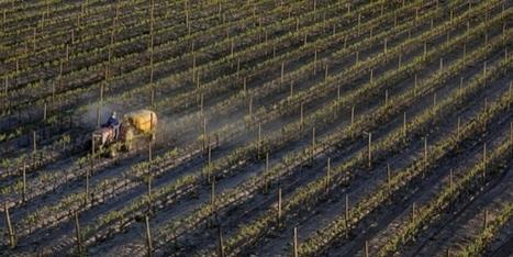 PESTICIDES: Ce que l'on sait des vrais dangers | #Pesticide | Scoop.it