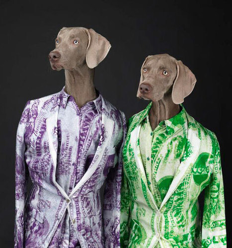 William Wegman for Acne | What's new in Visual Communication? | Scoop.it