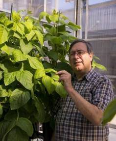 Low-allergen Soybean Could Have High Impact | Science Newsline | CALS in the News | Scoop.it