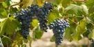 Vous avez aimé le Tavel... Alors vous aimerez aussi... | Chefs et vins | Scoop.it