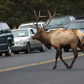 Montana State Senate Votes to Legalize Donating Roadkill to the Poor | Friday Reading AR | Scoop.it