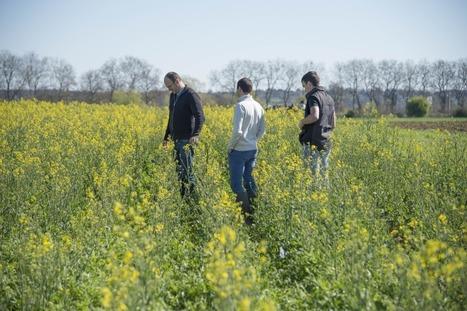 À Toulouse-Auzeville, l'agro-écologie en marche, les élèves aux commandes | Alim'agri | LPA Gilbert Martin | Scoop.it