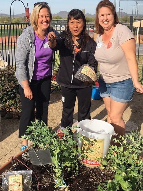 Arizona Schools recycle McDonald's coffee grounds in school gardens | School Gardening Resources | Scoop.it
