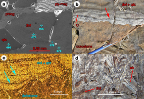 Rapid emergence of life shown by discovery of 3,700-million-year-old microbial structures | Mineralogy, Geochemistry, Mineral Surfaces & Nanogeoscience | Scoop.it