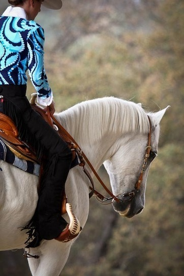The Growing Sport of Western Dressage | Dressage Dreams | Scoop.it