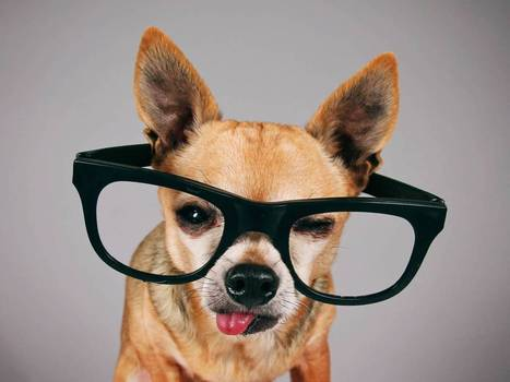 Canine geniuses? Why some animals are much smarter than we think - Salon | Animals, Photos, Cool Things | Scoop.it