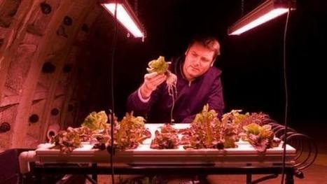 La fattoria che cresce sotto Londra, nei tunnel impiegati durante la guerra | mdnet stuff ov interest | Scoop.it